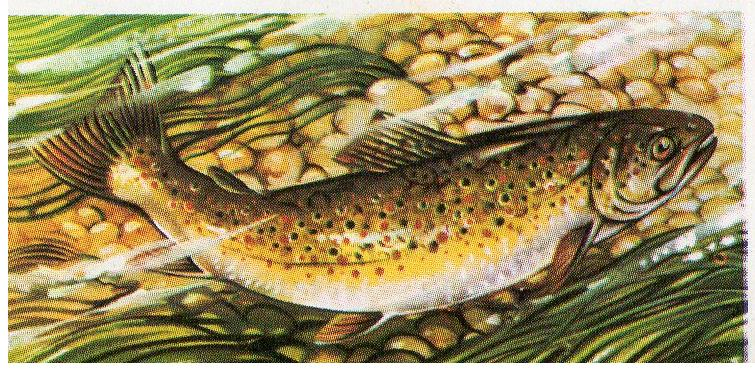 TROUT FISHING BOOKS